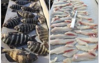 INSHORE VARIETY – Speckled Trout, Black Drum, Sheepshead and Red Fish  11-30-15