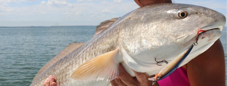 RED FISH EVERY WHICH WAY – dropping the hammer with artificials as well as bait