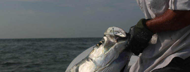 TARPON TACTICS – Couple Tarpon, Reds, Trout and Flounder