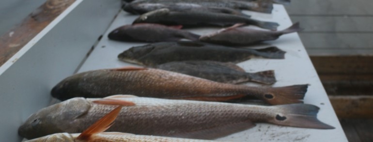 SLAMMIN POPPING CORKS – Flounder, Trout, Slot Reds and Bull Red spawn fun