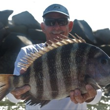 Solid 9 pound Sheepshead