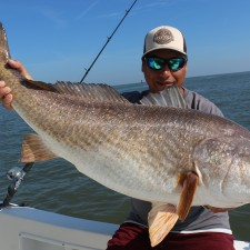 45 inch Bull Red Drum