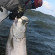 Chip Dellinger with the victory shot of 100+ pound Tarpon
