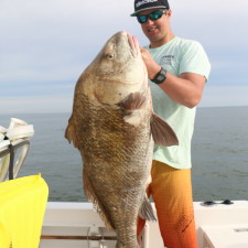Huge Black Drum
