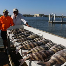 A mess of monster Sheepshead