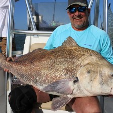 75 pound Black Drum