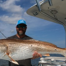 A truly giant Bull Red