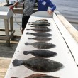 A healthy dose of Southern Flounder