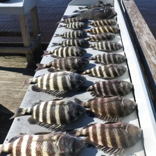 First Sheepshead trip of the season
