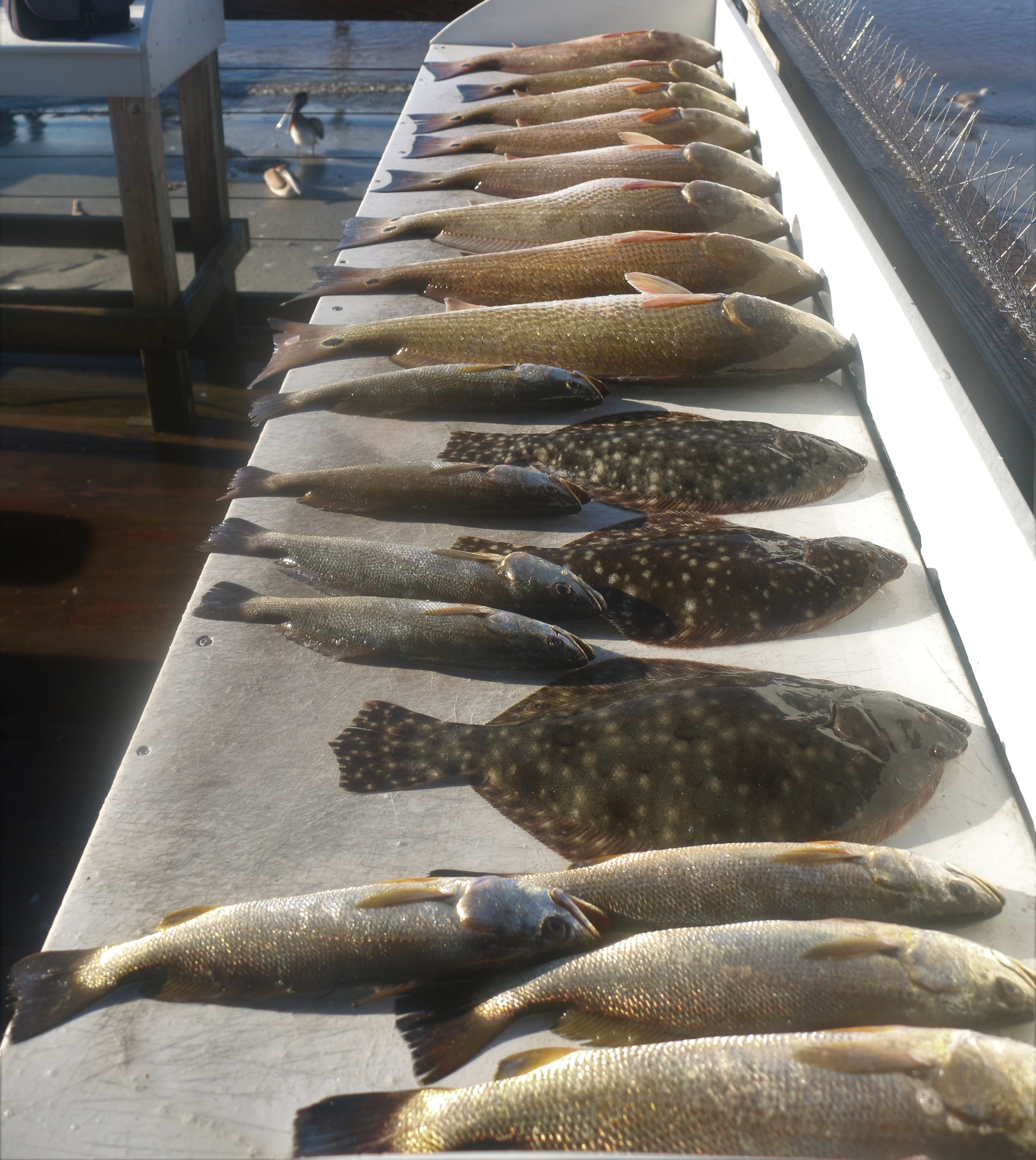 fish reports madness charters