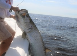 Summer Tarpon Rigging
